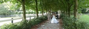 De voordelen van Rozenhof trouwringen